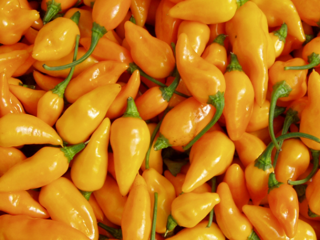 Datil Pepper Festival